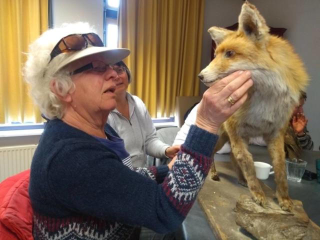 Voelen aan een opgezette vos