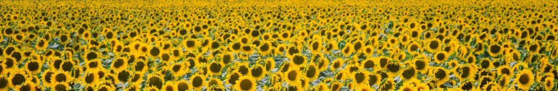 Tuinieren & zonnebloemenwedstrijd