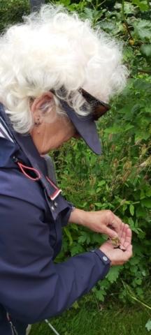 Anneke schut de zaadjes uit de Akelei. Deze plant is giftig voor huisdieren en kinderen.