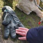 De verloren handschoen ligt eenzaam op een bankje